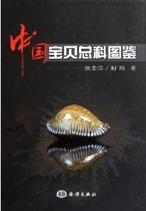 Cowries and Their Relatives of China