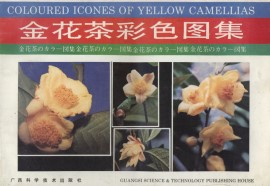 Coloured Icones of Yellow Camellias (out of print)