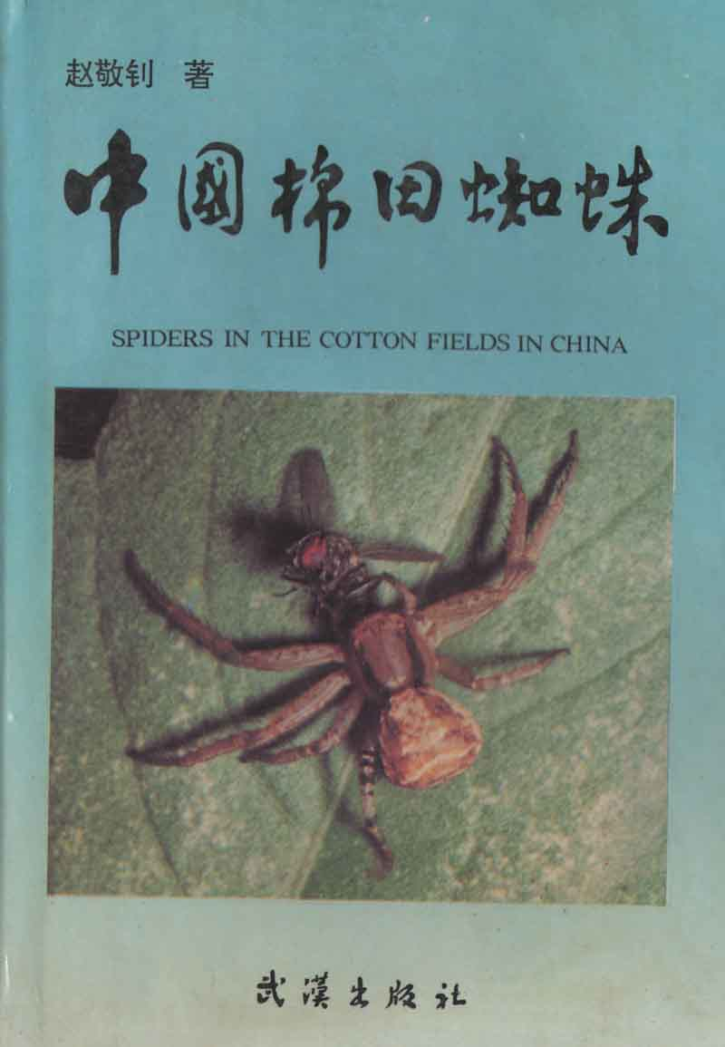 Spiders in the Cotton Fields in China