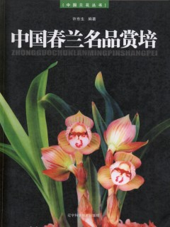 Superior Spring Orchid (Cymbidium goeringii) of China