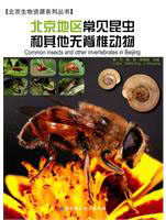 Common Insects and Other Invertebrates in Beijing