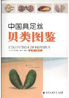 Collection of Mussels with Byssus in China