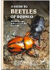 A Guide to Beetles of Borneo