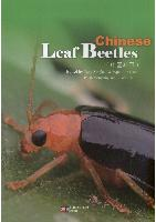 Chinese Leaf Beetles