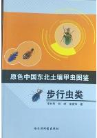 Primary Color Illustration of Soil Beetles in Northeast China-Carabid