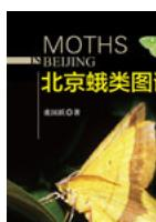 Moths in Beijing
